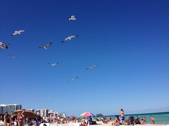 South Beach: Aves del mar