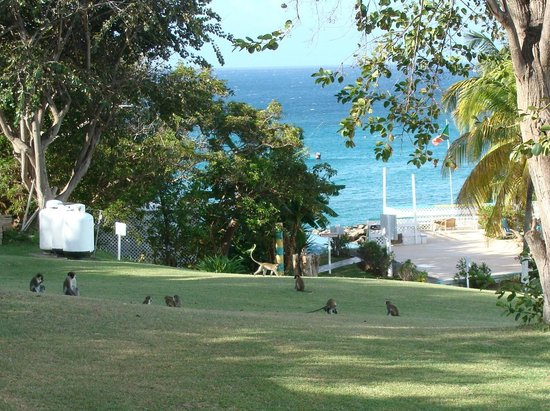 Timothy Beach Resort: Monkeys playing out back