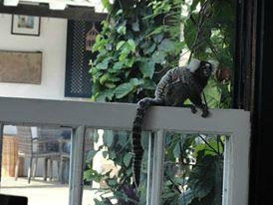 Pousada Pardieiro: Macaco visitando o café da manhã