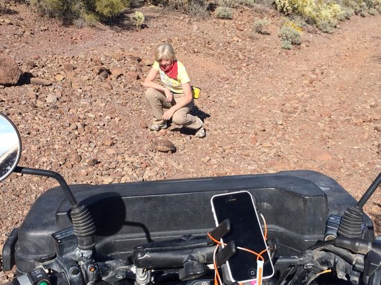 Adventures of a Lifetime ATV: Can you believe we saw a Desert turtle on this fabulous ATV ride!