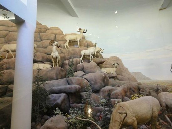 Biodiversity Institute & Natural History Museum: リアルなジオラマのひとつ
