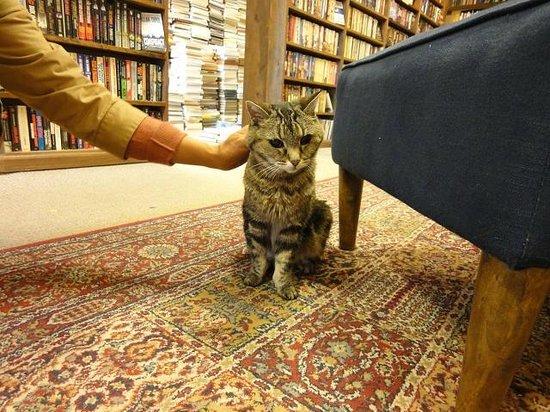 Massachusetts Street: 本屋の看板猫のアリス