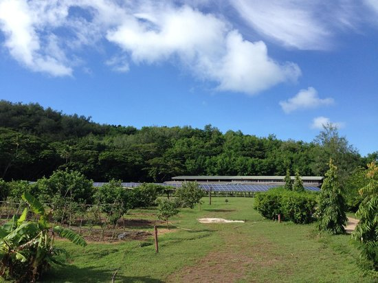 Turtle Island Resort: From papaya, passion fruit, citrus, banana orchards toward solar array.