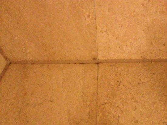 Grand Geneva Resort & Spa: Mold in corners of shower