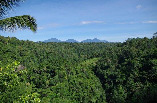 Ayung Resort Ubud : View is stunning