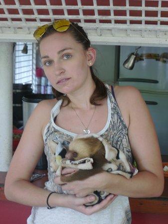 Fundación Jaguar Rescue Center: Die Volontärin, ein süßes Faultier-Baby präsentierend