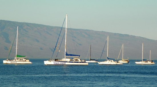 Lahaina Harbor: Sailing charter your thing?