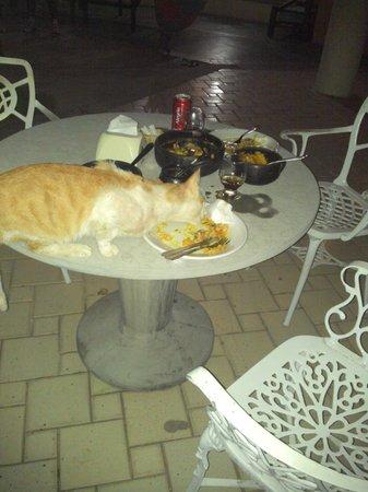 Resort Pau Brasil Praia: gato morador do hotel come nas mesas