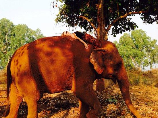 Ganesha Park : Le plein d'énergie avec yani