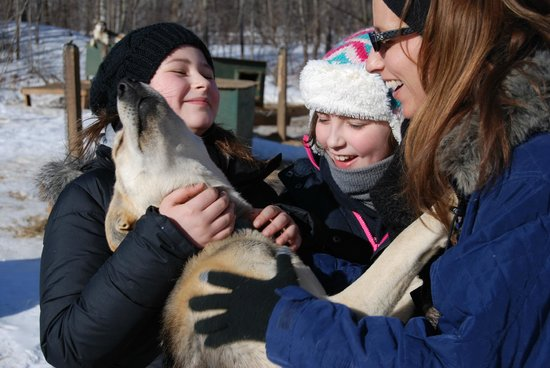 Muddy Paw Sled Dog Kennel - Day Tours: doggie kisses