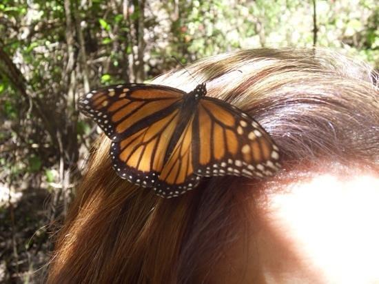 Monarch Butterfly Biosphere Reserve: Monarch 6
