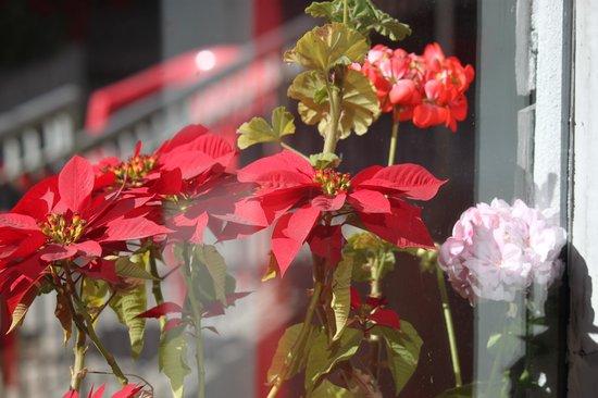 The Sood's Garden Retreat: flowers in the garden