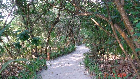Reethi Beach Resort: Connecting pathways