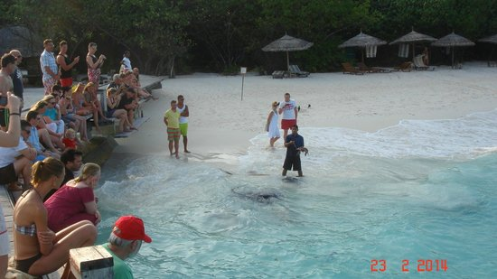 Reethi Beach Resort: Fish feeding