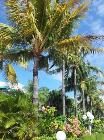 Best Western Hibiscus Motel: Sunny Island