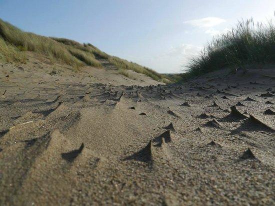 Shell Island : sand dunes