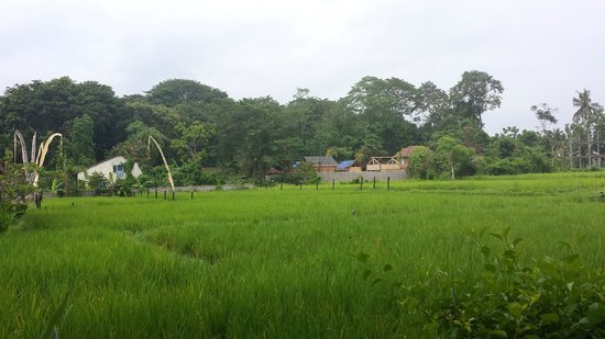 Saren Indah Hotel : Rice paddie to rear of room