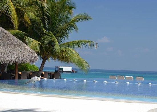Kuramathi Island Resort: beautiful pool