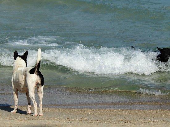 Anantara Rasananda Koh Phangan Villas: streunende Hund am Strand