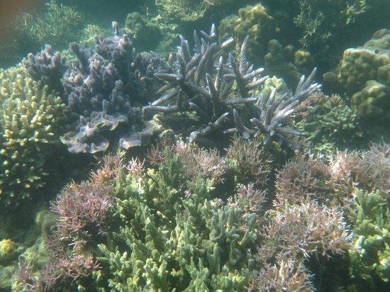 ดอส ปาล์มาส ไอส์แลนด์ รีสอร์ทแอนด์สปา: coral reef