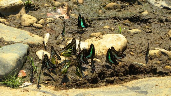 Aralam wildlife sanctuary: Butterflies