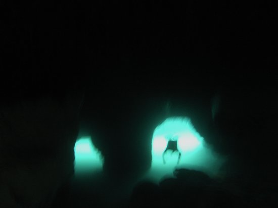 Koox Diving: In the caves