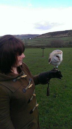 SMJ Falconry: Barn Owl