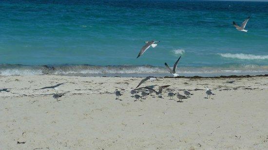 IBEROSTAR Laguna Azul: Varadero