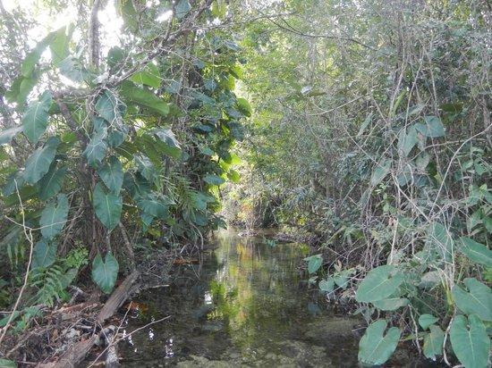 Yaxche Jungle Camp: Stream on Yaxche