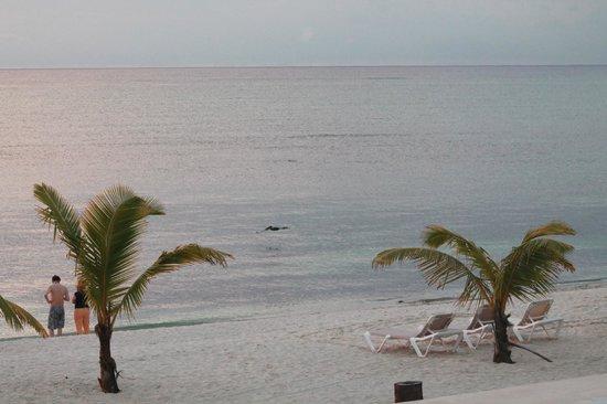 PavoReal Beach Resort Tulum: spiaggia