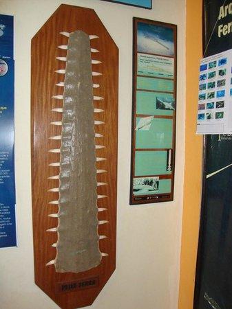 Museu do Tubarão: Vista interna