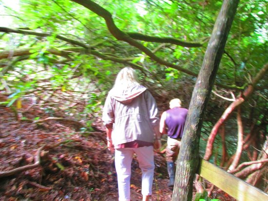 Miller's Land of Waterfall Tours: short hike to one, beautiful