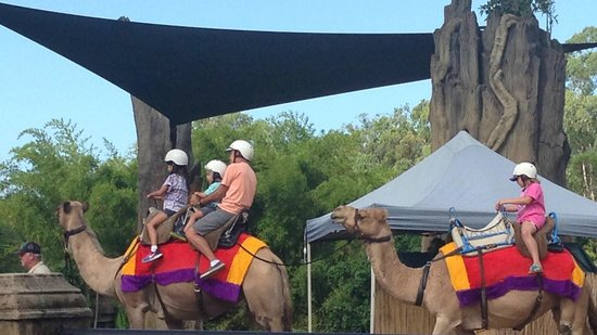 Australia Zoo : The camel ride, a big hit with the kids.