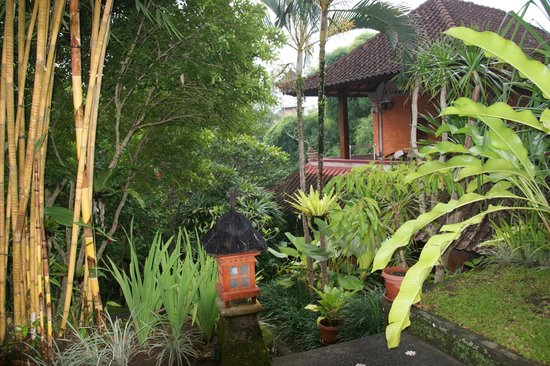 Ubud Bungalow: Rooms at the rear of the complex with that jungle feel :)