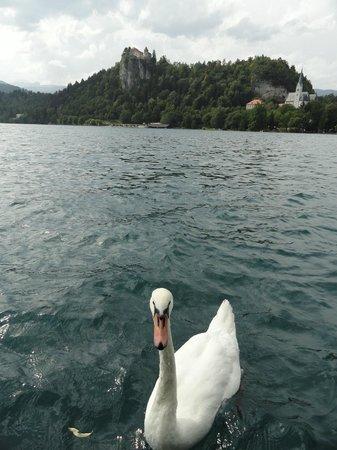 Hotel Kristal: Meer van Bled