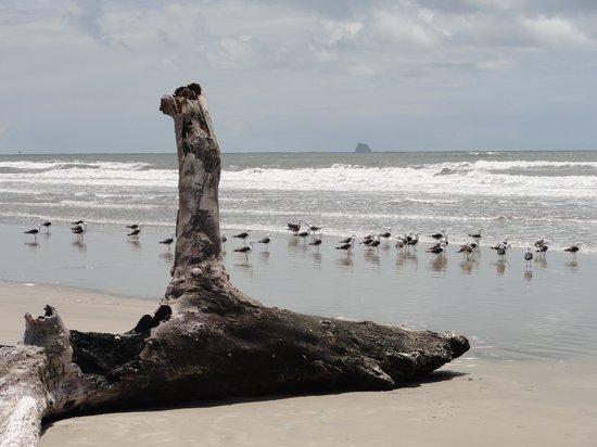 Guaraquecaba, PR: Na praia deserta da Ilha do Superagui