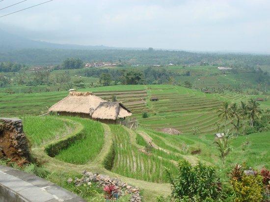 Jatiluwih Green Land: amazing