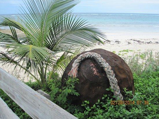 Stunning beaches on Eleuthera/off Tippy's outdoor patio