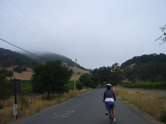 Napa Valley Bike Tours : Beautiful