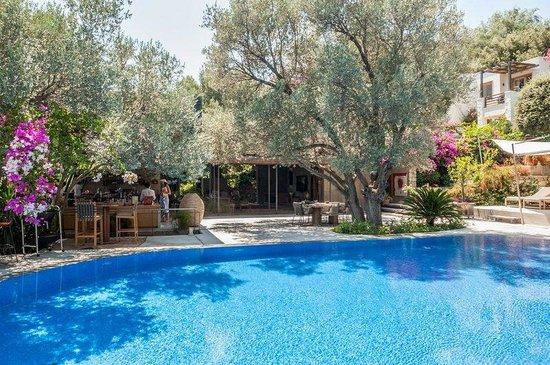 Macakizi Hotel Bodrum : Pool