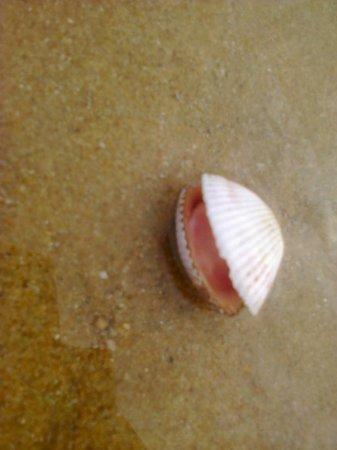 Pinnacle Grand Jomtien Resort: На пляже можно увидеть много интересных морских обитателей