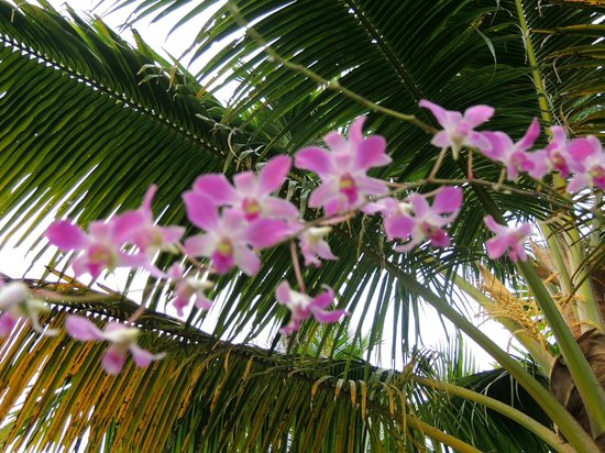 Palmgrove Lake Resort: Orchids planted in coconut shells