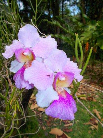 Finca Los Monos Botanical Garden: so pretty