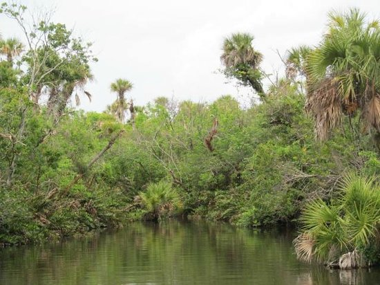 River Lilly Cruises: St. Lucie River