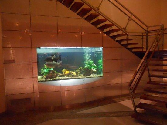 Hilton Kuwait Resort: Aquarium