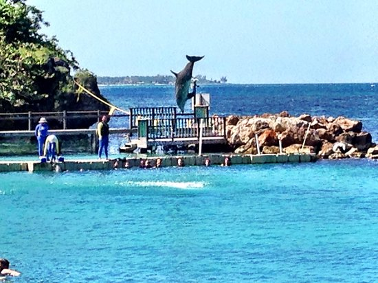Dolphin Cove: Flying Dolphine