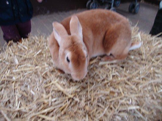 Rare Breeds Centre: bunny