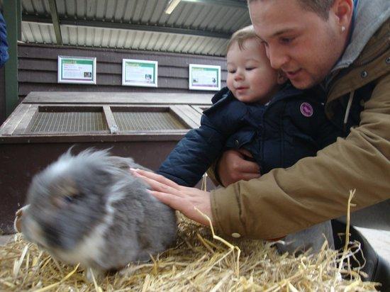 Rare Breeds Centre: petting zoo