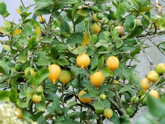 The Siena Village: Oranges n Lemon