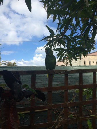 West Bay Lodge and Spa: Parrot perched by the pool